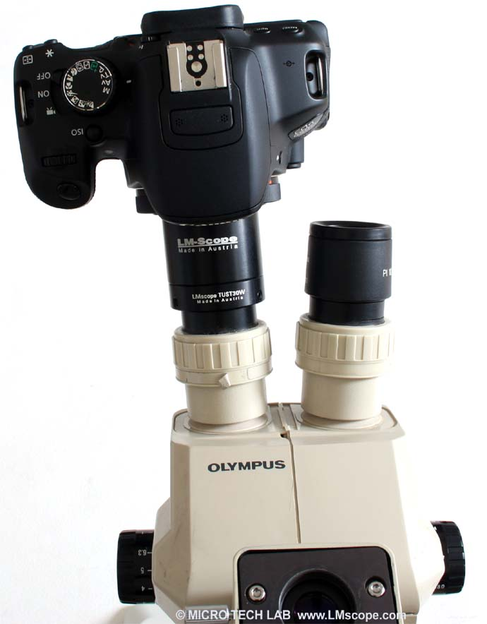 Olympus SZ60 und Canon Rebel T4i (EOS 650D) on eyepiecetube with LM digital adapter