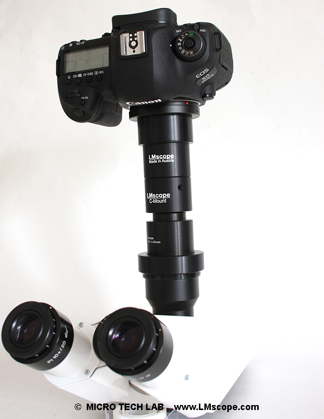 Canon EOS DSLR camera on microscope photoport with adapter