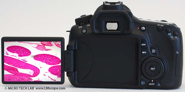 Canon EOS 60D back view