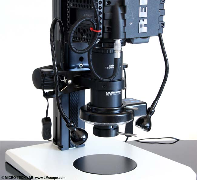 Red scarlet an LM macroscope16x