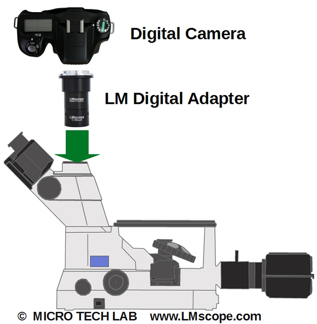 Montage der DSLR via LM Digital Adapter
