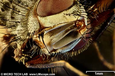 Web Gallery: Photos created with Digital Cameras, Microscope Adapters, LM Macroscopes,Extreme Macro Lenses, addon macro lens, Focus stacking