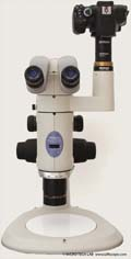Microscope photography with the Nikon SMZ1500 stereoscopic zoom microscope