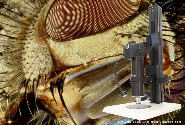 LM photo microscopes: the flexible photography solution for large sensor cameras!