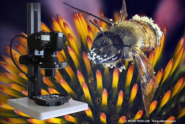 LM Macroscope 9x (5x and 3x) for Focus Stacking: Highest resolution without compromise